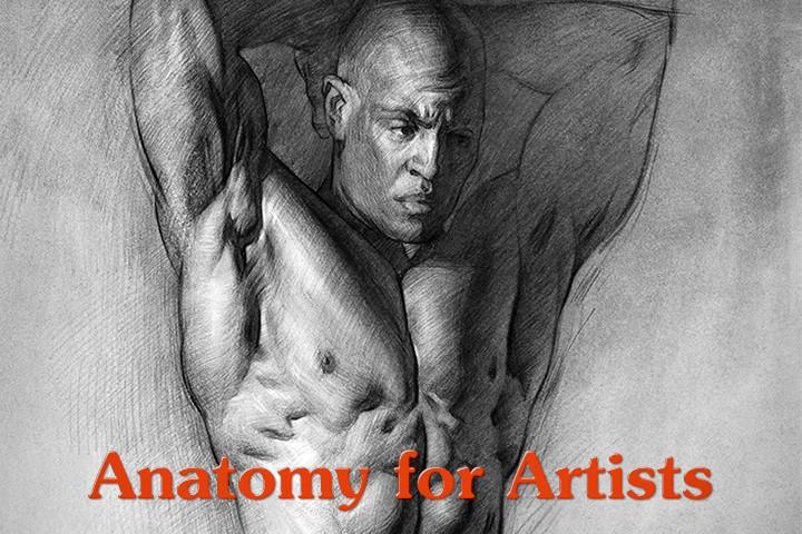 Anatomy Drawing Premium WP